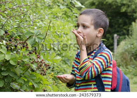 Child boy picking and eating wild blackberries from a bush in a hedge - stock photo