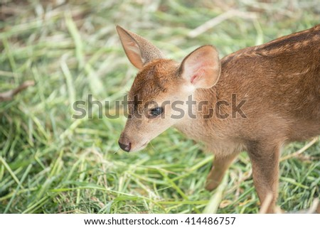 child deer in grass field at zoo - stock photo