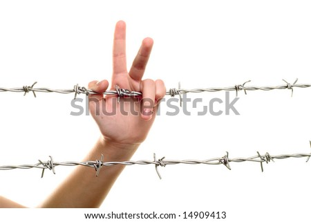 child hand on barbed wire - stock photo