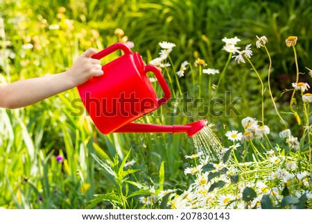 Child hand watering a plant with watering can. - stock photo