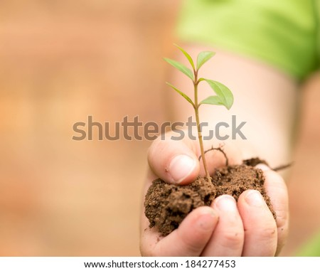 Child holding green plant - stock photo