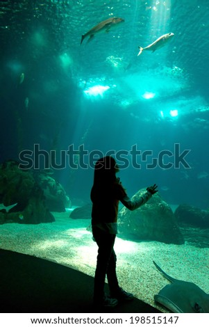 Child in a water park looking at fish through the glass - stock photo