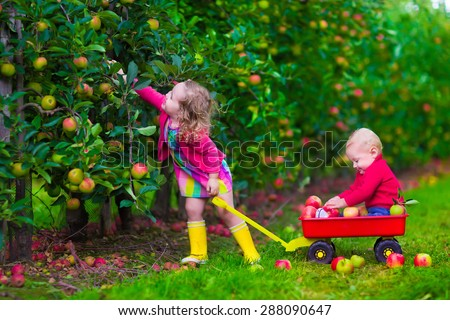 Child picking apples on a farm. Little girl and boy play in apple tree orchard. Kids pick fruit in autumn with a wheel barrow. Toddler and baby eat fruits at fall harvest. Outdoor fun for children.  - stock photo