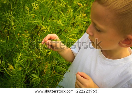 Child playing on green meadow examining field flowers looking at ladybug on plants.  Environmental awareness education. - stock photo