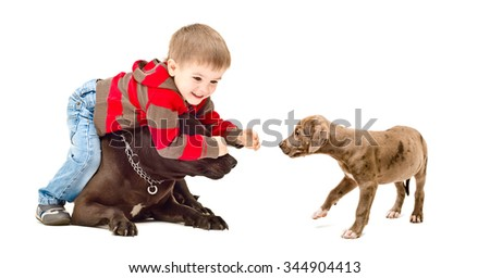 Child playing with the dog and puppy isolated on white background - stock photo