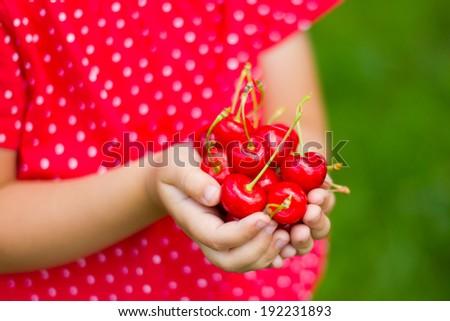 Child's hands full of fresh cherries.  - stock photo