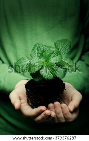 Child's hands holding strawberry baby plant - stock photo