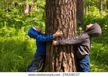 Children (boys, hands) hugging pine, playing and having fun outdoor in summer forest (park). Environmental protection concept. - stock photo