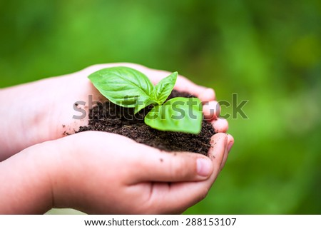 Children hands holding a green young plant (basilic plant) - stock photo