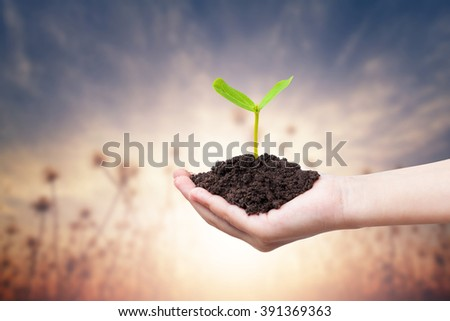 Children hands holding a green young plant on warm tone background - stock photo