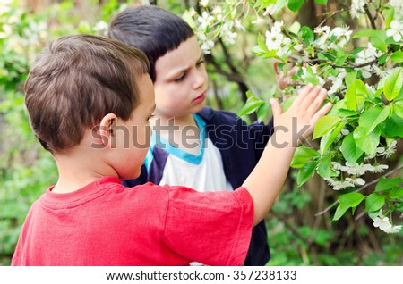 Children looking at blossoming cherry tree in a garden. - stock photo