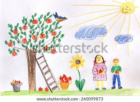 children picking apples in the garden  - children drawing - stock photo