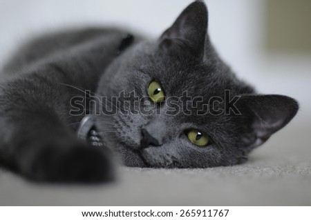 Chill Cat - stock photo