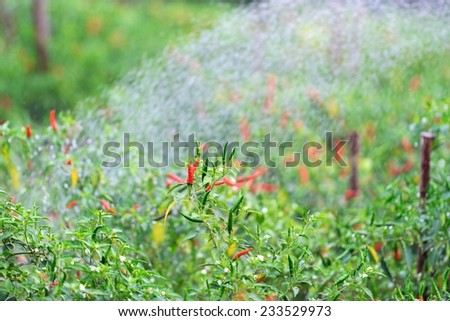 Chill garden with water spraying - stock photo