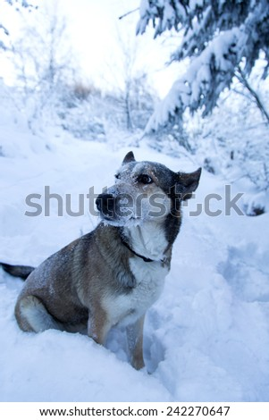 chilled sad dog in the forest - stock photo