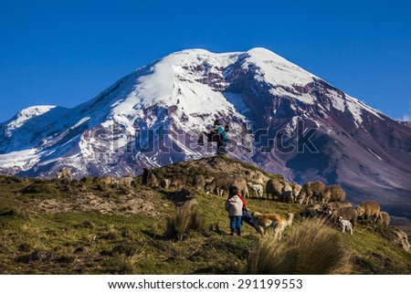 Chimborazo (6310 m.) volcano and sheep on the moor, Andes, Ecuador - stock photo