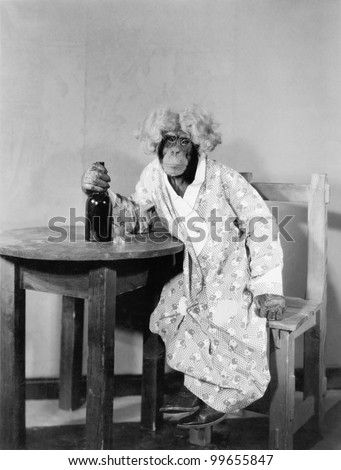 Chimpanzee dressed as woman with bottle and shot glass - stock photo