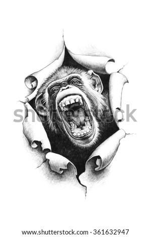 Chimpanzee with open mouth breaks through the paper. The idea for tattoo and printing on t-shirts. Pencil drawing illustration. - stock photo