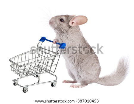 Chinchilla with shopping trolley . Series of isolated images. - stock photo