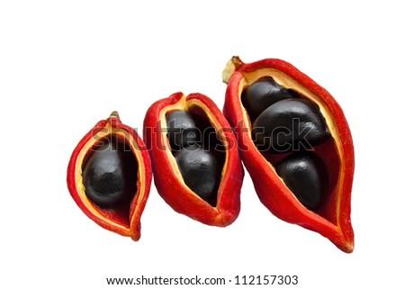 Chinese chestnut  on white background - stock photo