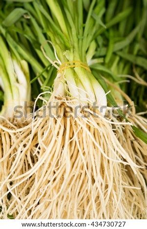 Chinese chives, root - stock photo