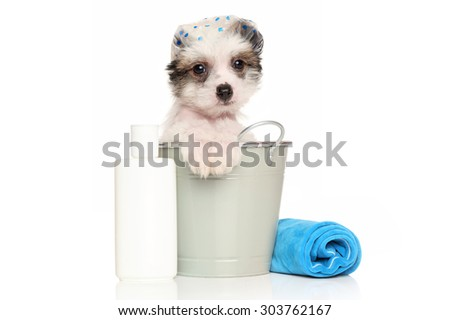 Chinese crested puppy sitting in the bath bucket near the shampoo and towel - stock photo