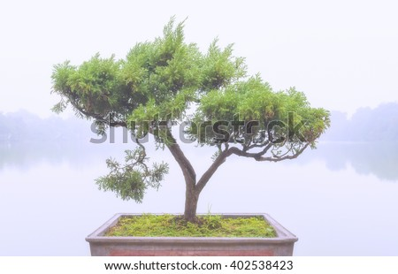 Chinese green bonsai tree with cool and foggy filter style   - stock photo