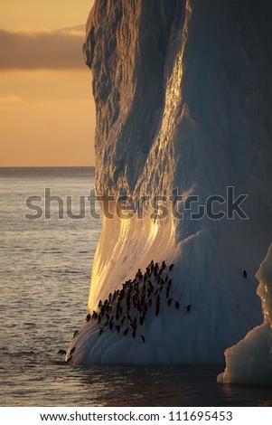 Chinstrap penguins on iceberg, Antarctica - stock photo