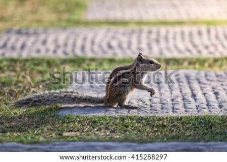 chipmunk on an alley in the park at sunset - stock photo