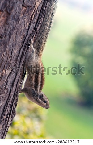 Chipmunk on the tree on blurred background - stock photo