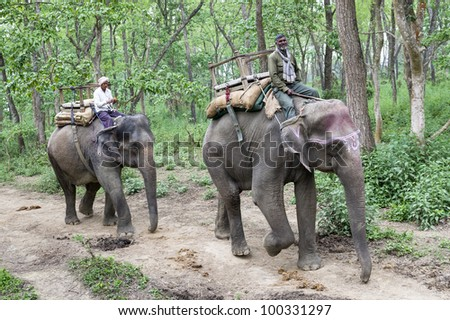 CHITWAN, NEPAL - MARCH 12: Local inhabitant coming back home on an elephant at Chitwan National Park on March 12, 2012 in Chitwan Park, Nepal. The park become a Unesco World Heritage Site in 1984. - stock photo