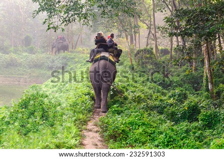 CHITWAN, NEPAL - OCTOBER 27, 2014: Elephants walking on the lawn at Elephant safari tour Chitwan National Park. Chitwan National Park was established in 1973 and granted the status of a World Heritage - stock photo