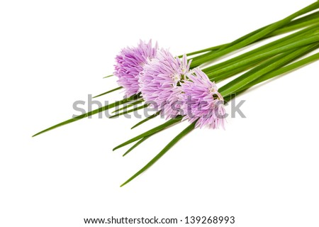 Chives flowers isolated on white - stock photo
