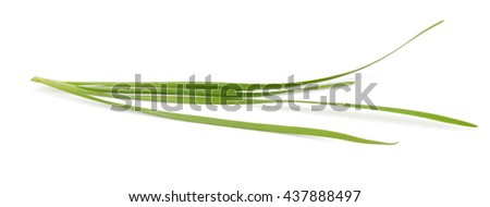 chives leaves (leek) isolated on pure white  - stock photo