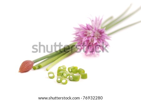Chives with pink flower on white - stock photo