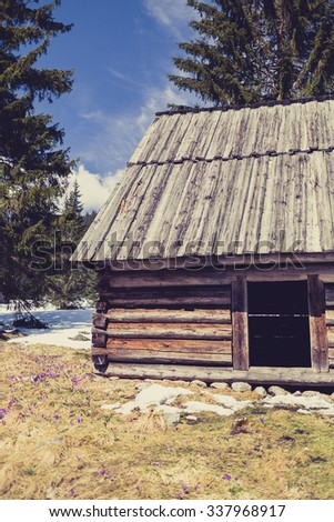 Chocholowska valley, inspirational landscape Tatra Mountains, Poland. Beautiful old wooden hut on mountain meadow with crocus purple flowers blooming on sunny spring day, retro vintage style. - stock photo