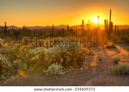 Cholla and Saguaros catching day's last rays. - stock photo