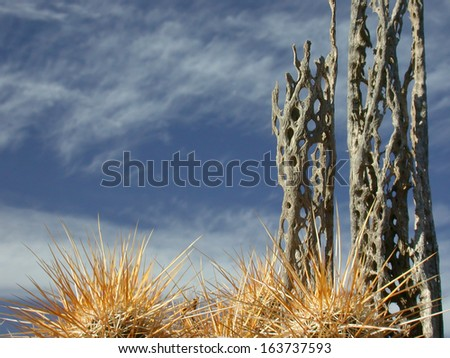 Cholla skeletons and hedgehog cactus - stock photo