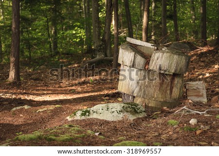 Chopped wood stump on the side of a forrest trail in rural New England - stock photo