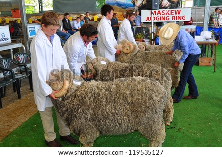 CHRISTCHURCH, NEW ZEALAND - NOVEMBER 16: Judging the Rams at the 2012 Canterbury A&P Show on November 16, 2012 in Christchurch. - stock photo