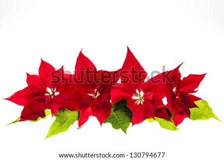 Christmas arrangement with red poinsettia plants isolated on white background - stock photo