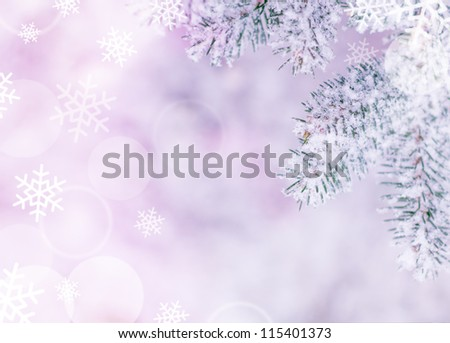 Christmas Background with Fir-tree and Real Snow - stock photo