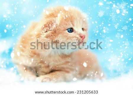 Christmas card. Cute red kitten in the snow. - stock photo