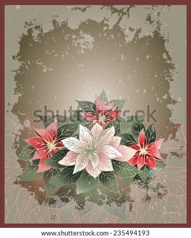 Christmas card. Illustration Poinsettia flower (christmas star). - stock photo