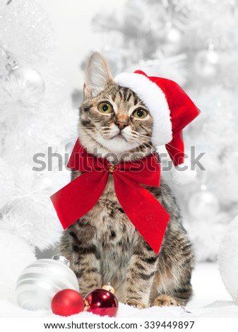 Christmas cat at red santa's hat  near christmas tree - stock photo