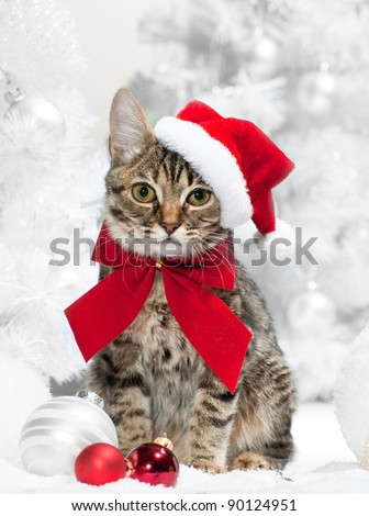 Christmas cat in red santa's hat  near christmas tree - stock photo