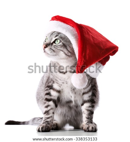 Christmas cat isolated on white - stock photo