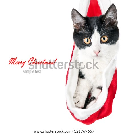 Christmas cat, kitten sitting in a Santa Claus hat, isolated on a white background - stock photo