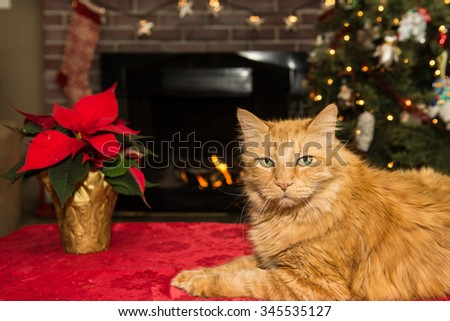 Christmas cat relaxing by the fire. - stock photo
