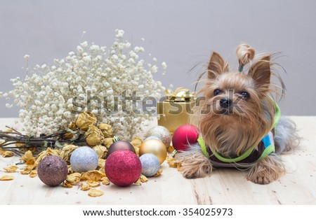 Christmas decoration and dog - stock photo